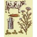 Gravure champêtre : la vache